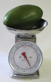 Avocado weighs 2 3/4 pounds