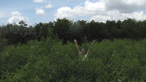 Margie swimming in the sea of sunn hemp