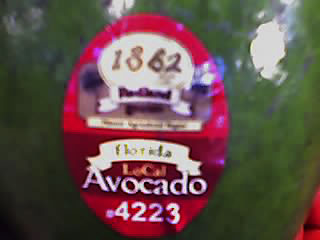 Redland Best Florida avocado