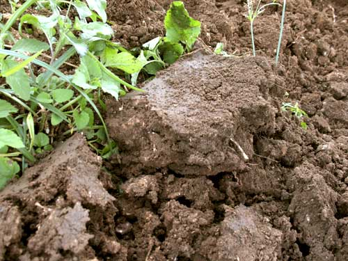 Wet soil clumps
