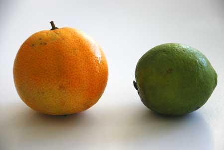 Rangpur lime   Redland Rambles