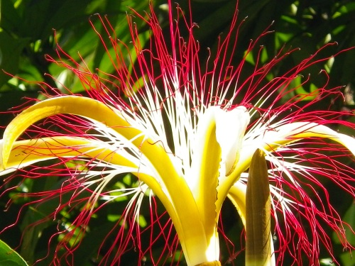 The Firework Flower