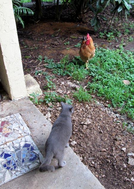 Put Food Near Cat Poops