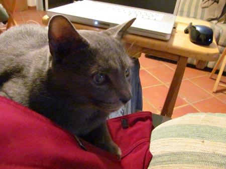 greyling-lap