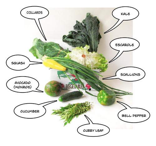 CSA small share: week 4