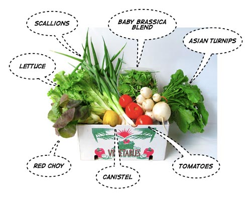 CSA small share: week 9