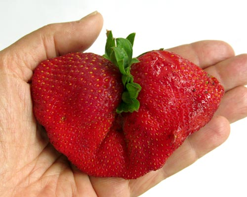 double-strawberry