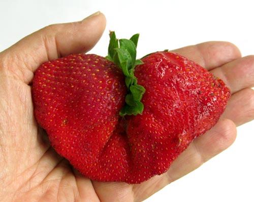 double-strawberry