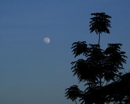 summer-moon