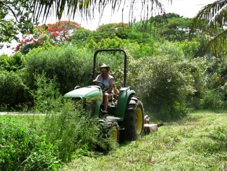 summer-mow