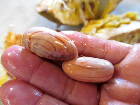 Jackfruit seeds can be cooked and eaten.