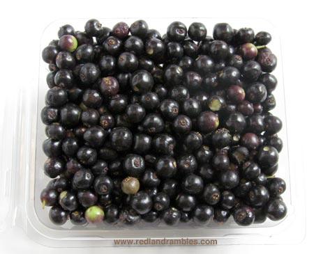 Ripe fresh allspice berries, half pint.