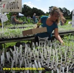 Browsing through a sea of seedlings in the heirloom tomato section. (GrowFest! 2012)