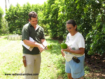 Tropical Fruit Agent Jeff Wasielewski and Margie Pikarsky open up an avocado.