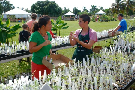 Farm intern Nicole Fiori helps a customer choose heirloom tomato seedlings.