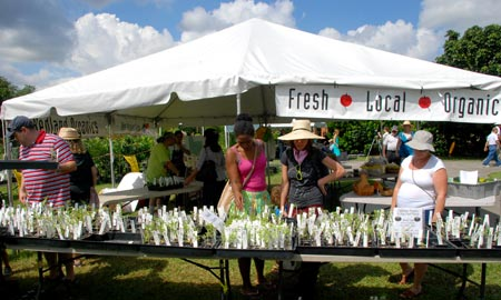 Browsing for organic seedlings at the Bee Heaven Farm tent.