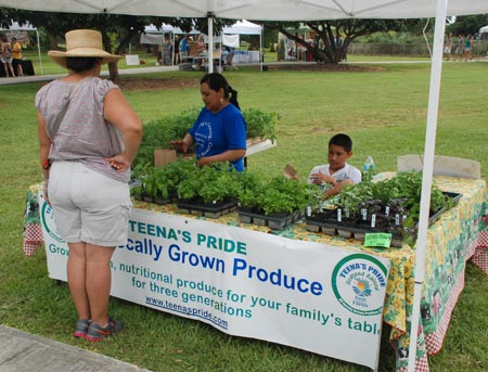 Fresh potted herbs from Teena's Pride Farm
