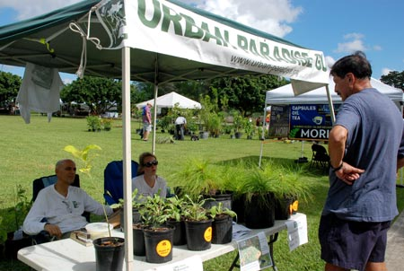 Buy native plants from the Urban Paradise Guild
