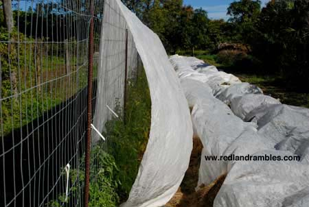 Reemay draped over tomato trellis before getting tied down. Bush beans got covered too.