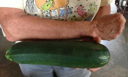 Zucchini the size of her arm.