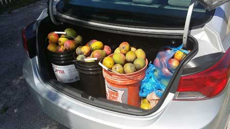Got mangoes? Photo by Serge Penton.